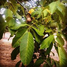 frutos-de-otono